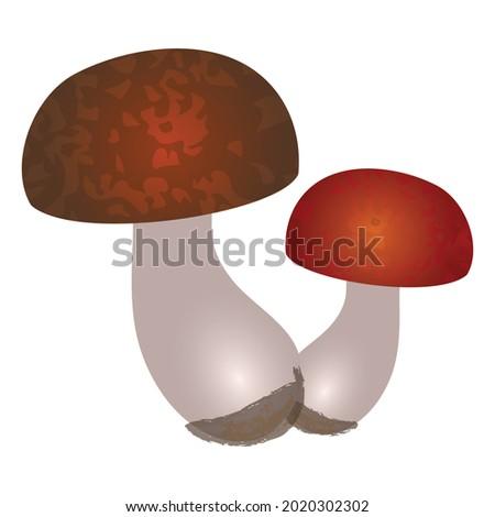 flat art mushrooms with round