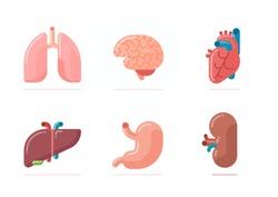 Flat design illustration of human organs - brain, heart, lungs, liver, stomach, kidney
