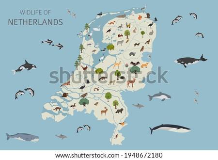 flat design of netherlands