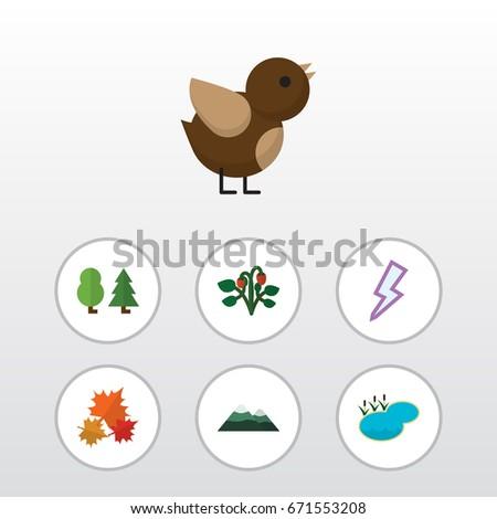flat icon natural set of bird