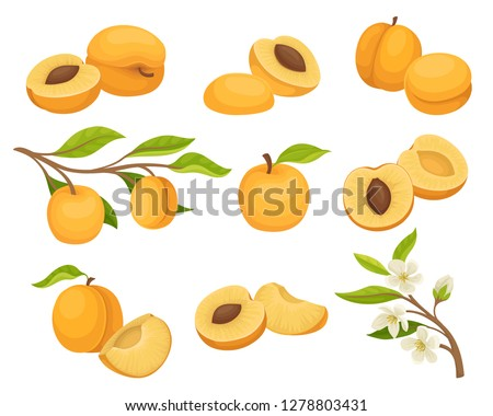 flat vector set of apricot