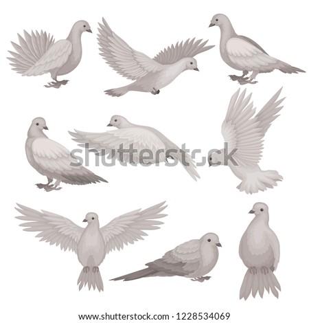 flat vector set of dove bird