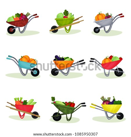 Flat vector set of garden wheelbarrows full of fresh vegetables. Natural and tasty food. Organic farm products #1085950307