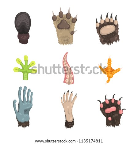 flat vector set of paws of