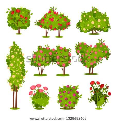 flat vector set of roses bushes