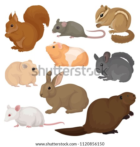 Flat vector set of various rodents. Small forest and domestic animals. Mammal creatures. Fauna and wildlife theme