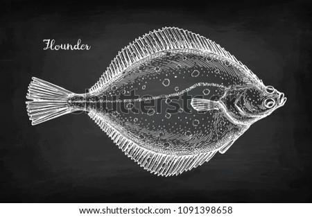 Flatfish. Chalk sketch of flounder on blackboard background. Hand drawn vector illustration. Retro style.