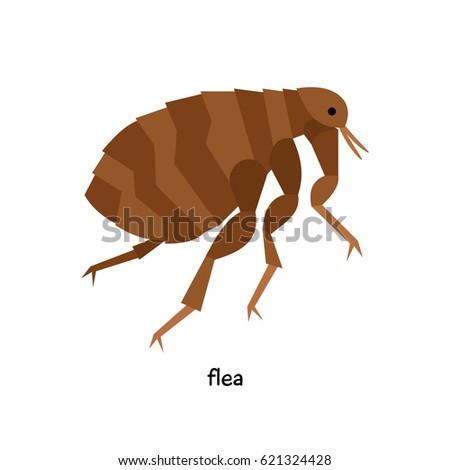 Flea  - insect pest, leading  parasitic lifestyle, necessarily associated with particular host
