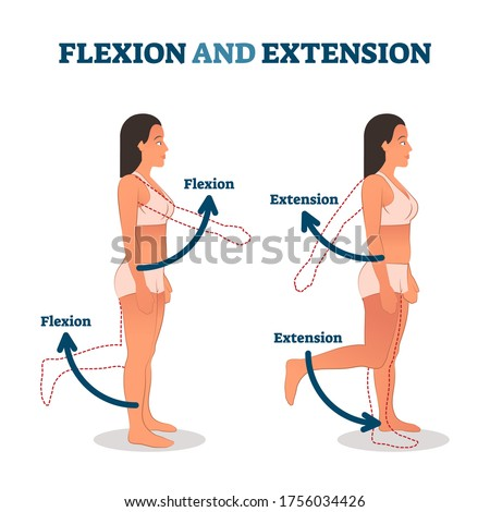 Flexion and extension vector illustration. Anatomical movement description. Educational arm or leg exercise to bend or straighten body parts. Normal healthy patient as biological kinesiology example. Foto stock ©