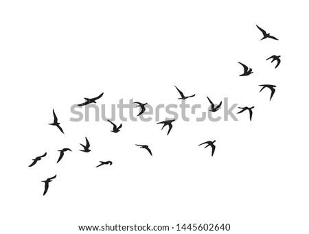 Flock of Birds, Black and White Vector Design