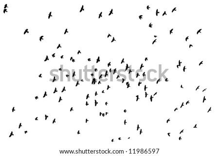 Flock of birds silhouette over white