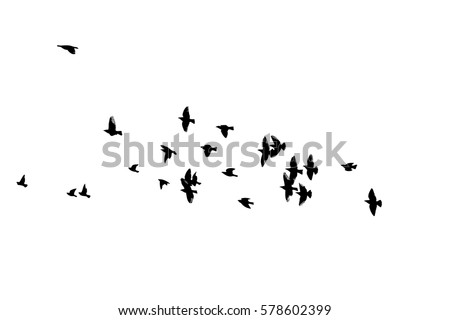 stock-vector-flock-of-birds-silhouette-vector
