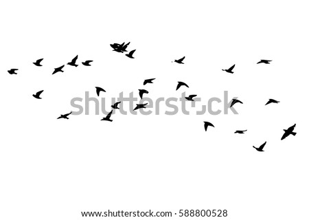 flying bird silhouette vector download free vector art stock rh vecteezy com flying bird silhouette vector free bird silhouette vector art free