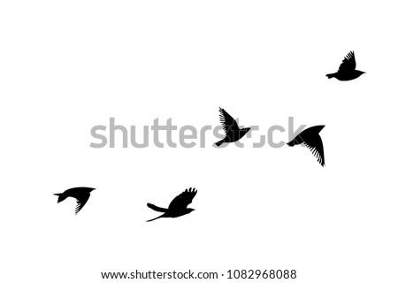 flock of flying birds vector