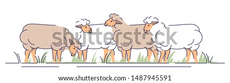 flock of sheeps on pasture flat