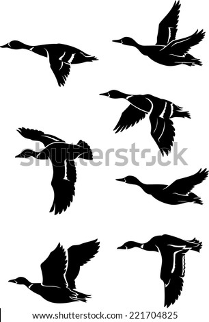 flock of wild ducks