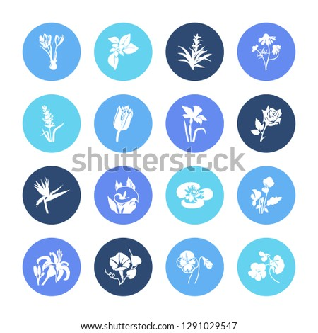 Flora icon set and guzmania flower with arum lily, tiger lily and morning glory. Decorative related flora icon vector for web UI logo design.