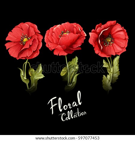 floral collection poppy