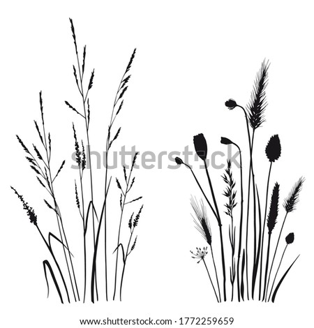 Floral compositions with wild herbs and flowers. Black and white silhouette illustration. Hand drawn vector isolated on white. Foto d'archivio ©