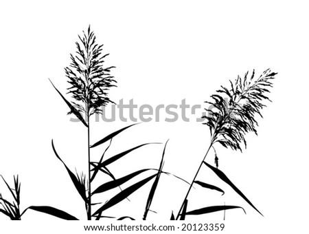 Floral contours vector