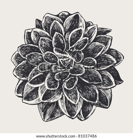 floral design element, engraved retro style. vector illustration