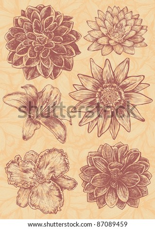 floral design elements set, engraved retro style. vector illustration