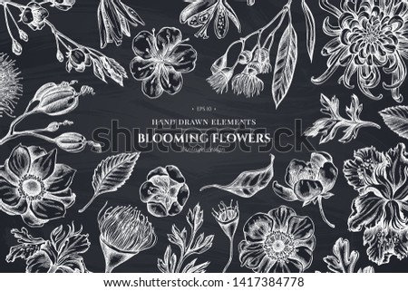 Floral design with chalk japanese chrysanthemum, blackberry lily, eucalyptus flower, anemone, iris japonica, sakura #1417384778