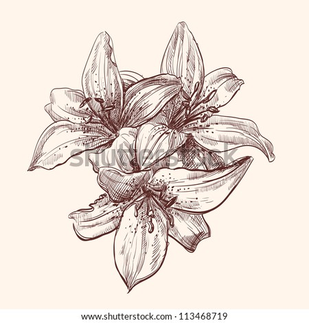 floral lily vintage drawing vector illustration  isolated