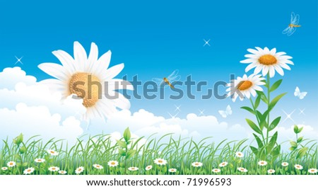Floral meadow collection with camomiles