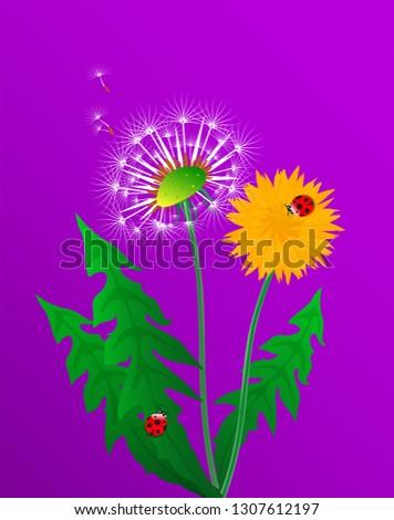 floral poster  flyer or card