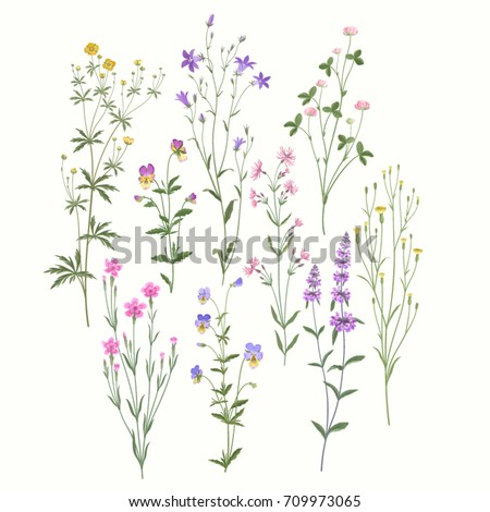 floral set. meadow flowers
