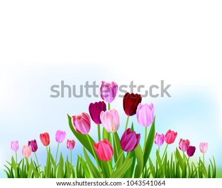 floral tulip spring banner