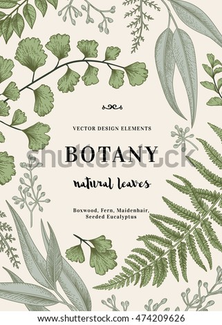Floral vector background. Vintage invitation with various leaves. Botanical illustration.  Fern, seeded eucalyptus, maidenhair. Engraving style. Design elements.