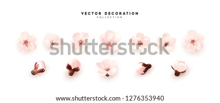 Flower blossom sakura. Design of realistic floral buds isolated on white background