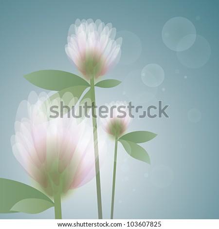 flower clover in the morning