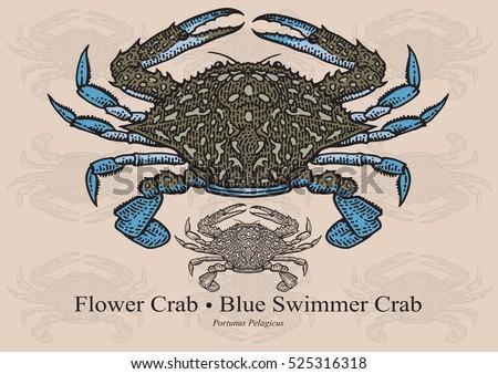 flower crab  blue swimmer crab