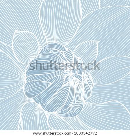 flower dahlias close up