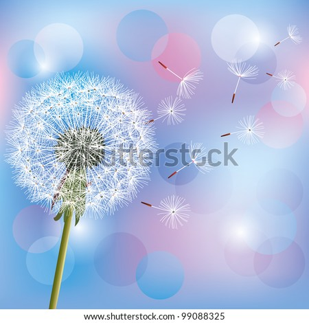 Flower dandelion on light blue - pink background, vector illustration. Place for text