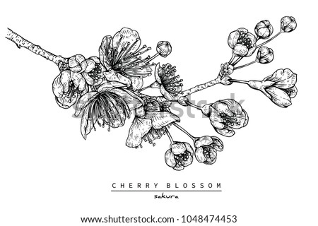 flower drawings collection of