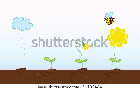 Flower growing stages. Process of growing plant in four stages. Vector Illustration.