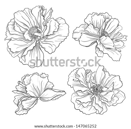 Poppy flowers download free vector art stock graphics images flower hand drawn poppies mightylinksfo