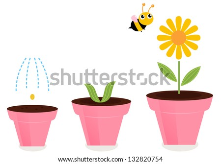 flower in pots growth stages
