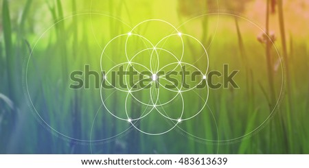 Flower of life. Sacred geometry website banner with Fibonacci row, interlocking geometry shapes, flows of energy and particles. Mathematics, nature, and spirituality in nature. The formula of nature.