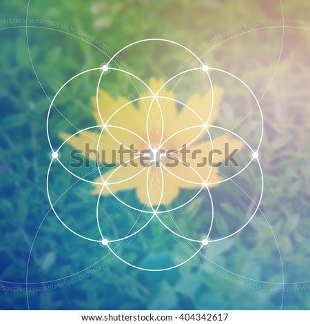 flower of life   the