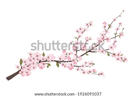 flower on white background Elements are isolated on a white background. Design for printing on cards, invitations Stock photo ©