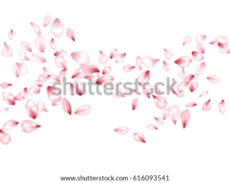 Flower petals flying vector background. Spring blossom isolated elements on white. Blossom parts confetti april or may windy pattern.