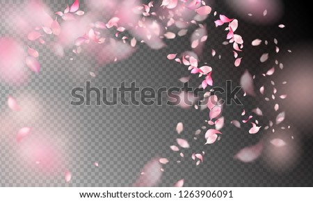 Flower Petals in the Wind. Flying petals on a transparent background