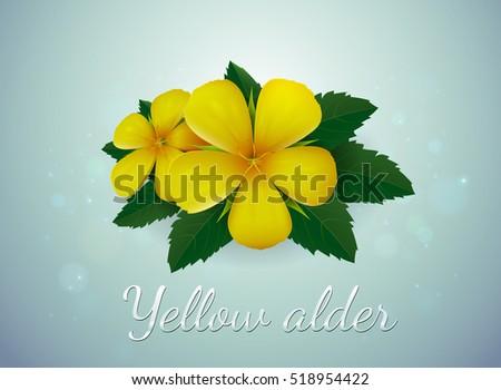 flower plumeria illustration