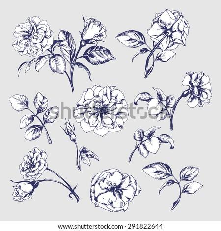 flower set  highly detailed