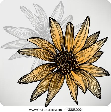 Flower sunflower, hand-drawing. Vector illustration.
